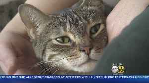 News video: Pepper The Cat Finally Found