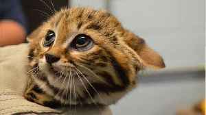 News video: Kittens Used And Killed In USDA Research