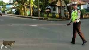 News video: Kind-Hearted Police Officer Stops Traffic To Help Cat Cross The Road