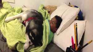 News video: An Adorable Dog Won't Let A Boy Go Out The Bed
