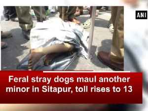 News video: Feral stray dogs maul another minor in Sitapur, toll rises to 13