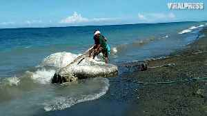 News video: Mystery Globster Sea Creature