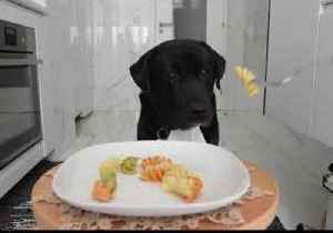 News video: Adorable Dog Will Put Your Table Manners to Shame