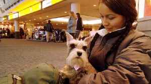 News video: New Rules for Emotional Support Animals on American Airlines