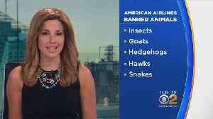 News video: American Airlines Bans Certain Comfort Animals