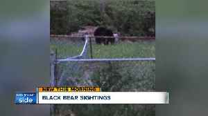 News video: Black bear in Brecksville spotted trying to get into beehive