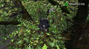 News video: Chimpanzees have cleaner beds than humans