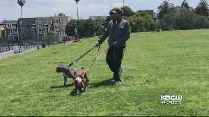 News video: Police In SF Search For Owner Of Pit Bulls In Dolores Park Attack