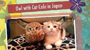 News video: An Owl's Unique Friendship With A Cat Attracts Visitors To This Japanese Cafe