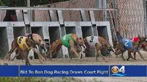 News video: Bid To Ban Dog Racing Draws Court Fight