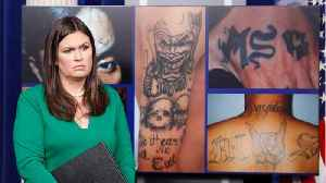 News video: Trump's 'Animals' Comment Only In Reference To Members Of Ultra-Violent MS-13 Gang