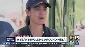 News video: Bear caught on camera strolling around Mesa neighborhood
