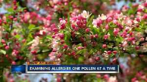 News video: Greenfield allergist records his highest pollen count in 23 years