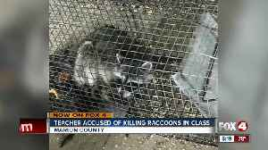 News video: School investigates report that teacher drowned raccoons