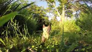 News video: British cats are running rings round their owners