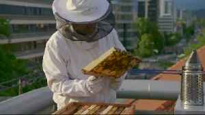 News video: Slovene beekeepers hope to have a stinging impact on bee preservation