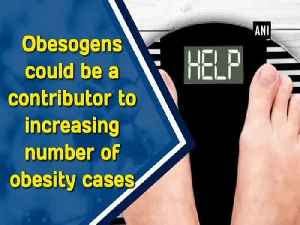 News video: Obesogens could be a contributor to increasing number of obesity cases