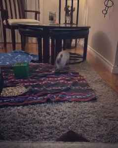 News video: Hopping bunny gets case of the zoomies