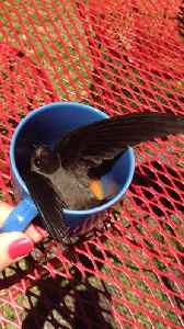 News video: Woman Tries To Help Bird Escape Her Kitchen But He Only Wants Coffee