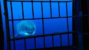 News video: Europe's largest aquarium opens in France