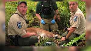 Cougar That Killed Mountain Biker Was 'Emaciated'