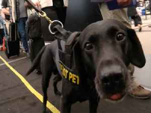 News video: Dogs named in memory of first responders carry on legacy