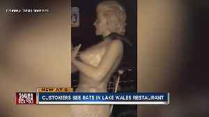 News video: Video captures large rats scaling wall of Manny's Original Chophouse in Lake Wales