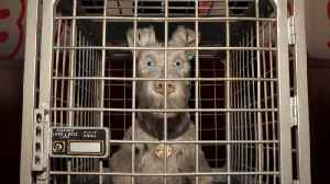 News video: Movie Report: 'Isle of Dogs'