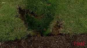 News video: A Sinkhole Has Been Spotted on the White House Lawn