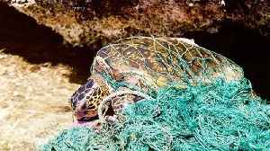 News video: Sea Turtles Have To Deal With Plastic Threats On Two Fronts