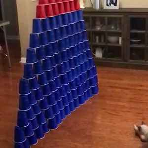 News video: Adorable Kitty Scores Perfect Game In Living Room Bowling