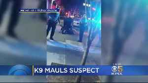 News video: Castro Valley Police Dog Mauls Suspect Already In Custody