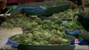 News video: Pot-laced cookies sends adult care center patient to hospital
