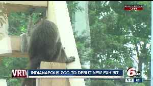 News video: Macaques Exhibit opening soon at Indianapolis Zoo