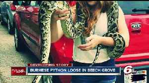 News video: 14-foot snake named 'Vine' escapes from Beech Grove home