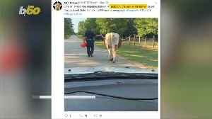 News video: Texas Deputy 'Grabs Bull by the Horns' and Walks It Home