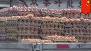News video: Baby chicks hatch in the back of a Chinese truck on a hot day