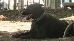 News video: More Than a Dozen Cases of Dog Flu Confirmed in Brooklyn