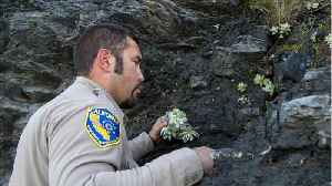 News video: Succulent Poachers Are A Growing Problem In Northern California