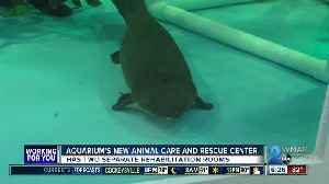 News video: Animal Care and Rescue Center opens at the National Aquarium