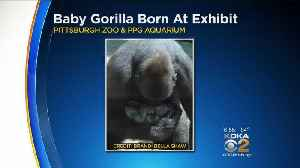 News video: Pittsburgh Zoo Visitors Witness Gorilla Give Birth