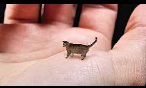 News video: World's Smallest Cat - Cute, Tiny and Mean