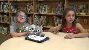 News video: Stuffed Koala Sparks Unexpected Friendship Between Classmates