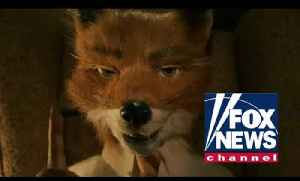 News video: Fantastic Mr. Fox News