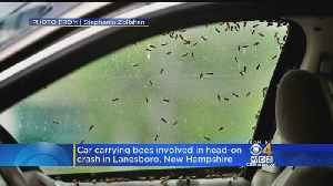 News video: Car Carrying Boxes Of Bees In Head-On Crash After Driver Stung