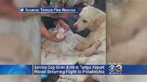 News video: Service Dog Gives Birth In Tampa Airport