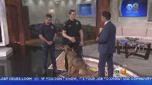 News video: Meet And Greet Glendale's K9s At The Glendale Police Foundation's 'K9s Night Out Benefit And Fundraiser'