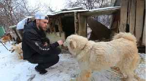 Olympian Gus Kenworthy Mourns Death Of Dog He Found In Korea