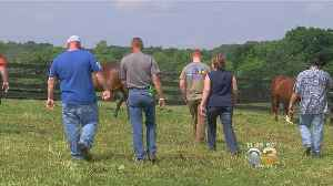 News video: Veterans Find Calm And Camaraderie With Horses; More Than 600 Participants In Louisville, Kentucky