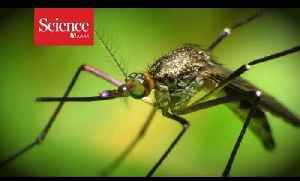News video: Help track mosquitoes with your cellphone